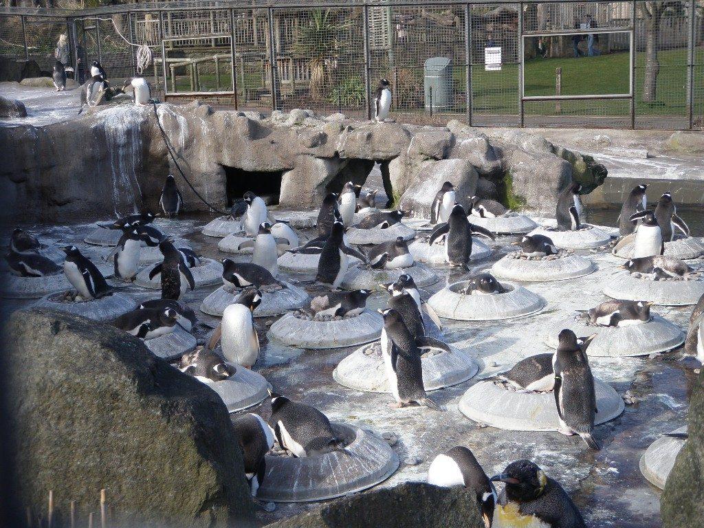 Σκωτία - Εδιμβούργο ζωολογικός κήπος