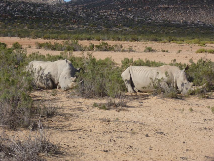 φωτογραφία Νότιος Αφρική